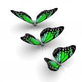 3D motýli