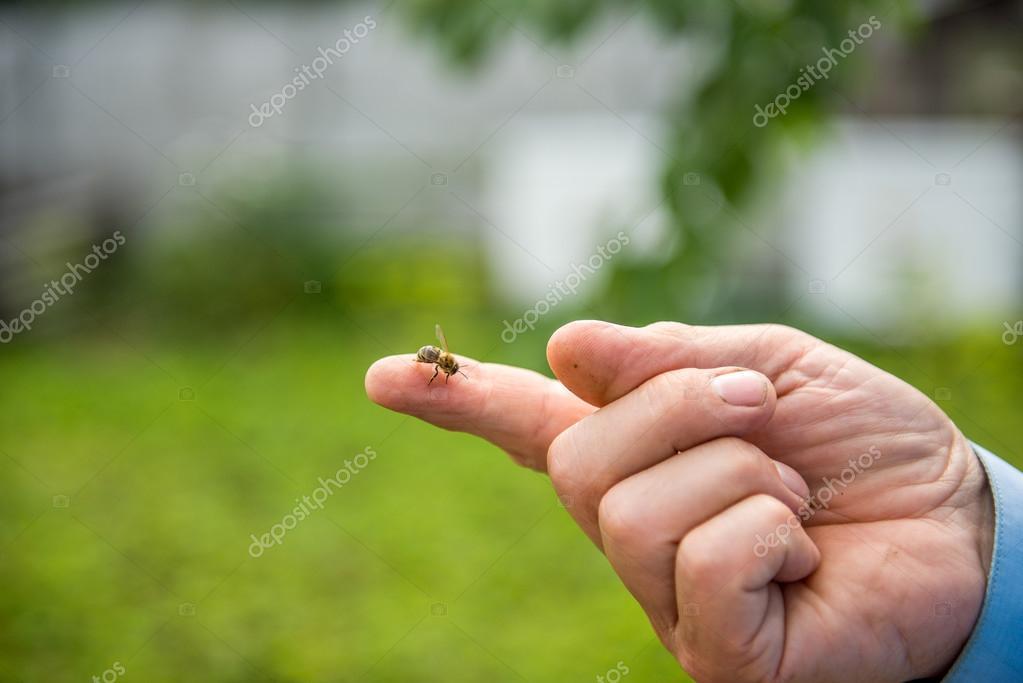 abeja se sienta en un dedo — Foto de stock © Serg0403 #115403890