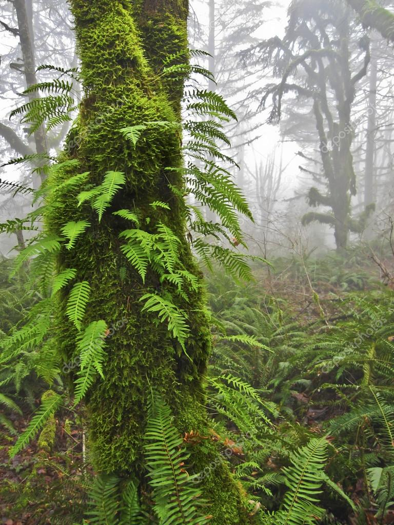 Mossy tree with ferns in Misty Forest