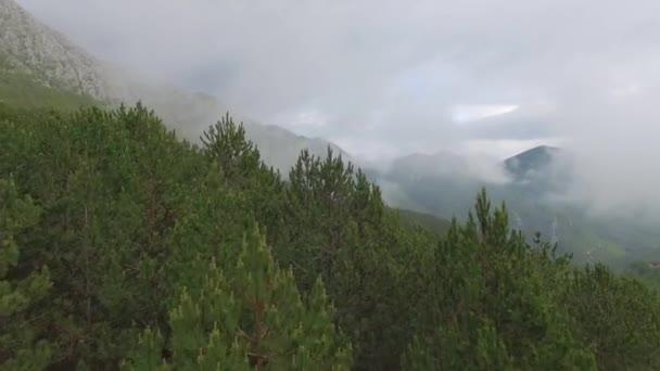 Letecký pohled na borovém lese v horách