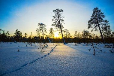 Winter sunset, animal footprints in  snow.
