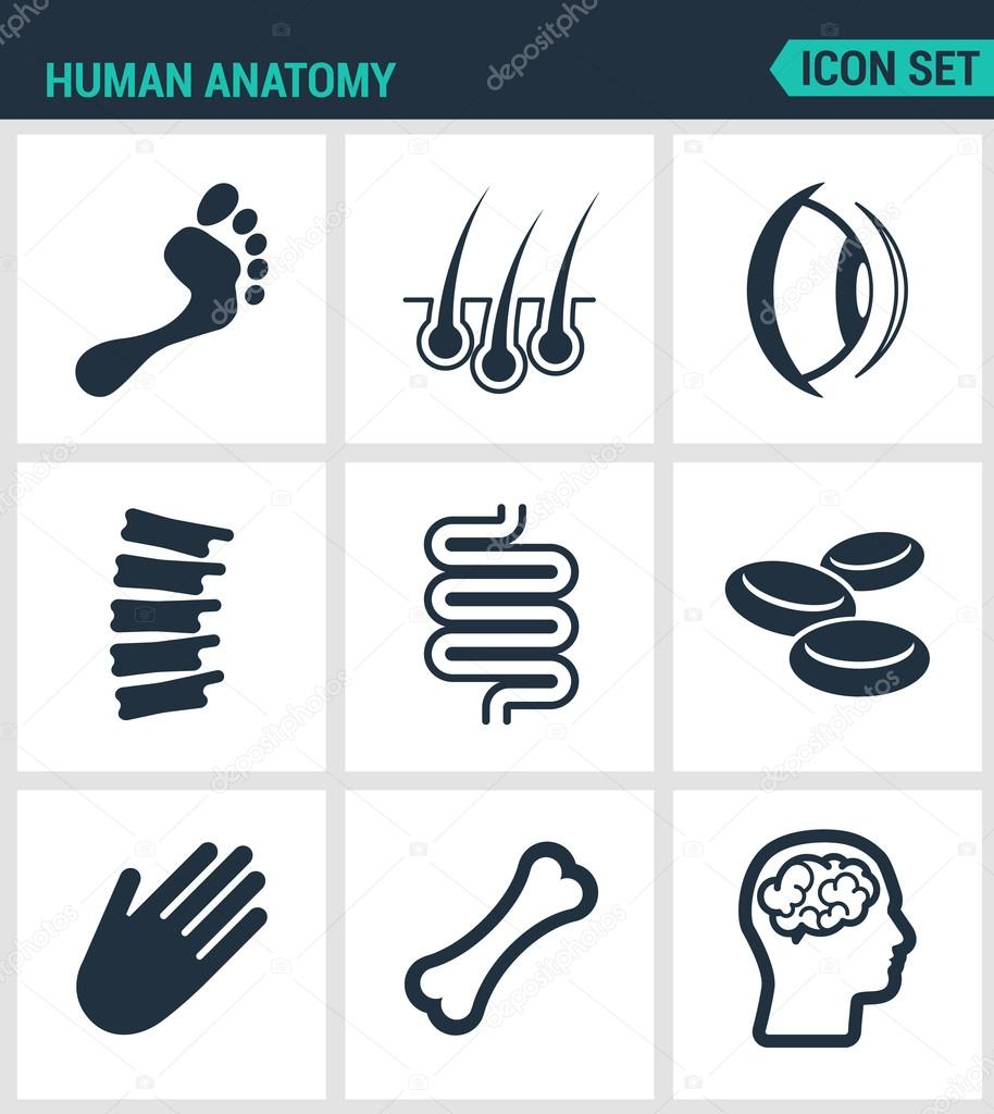 Set Of Modern Vector Icons Human Anatomy Leg Hair Eye Foot