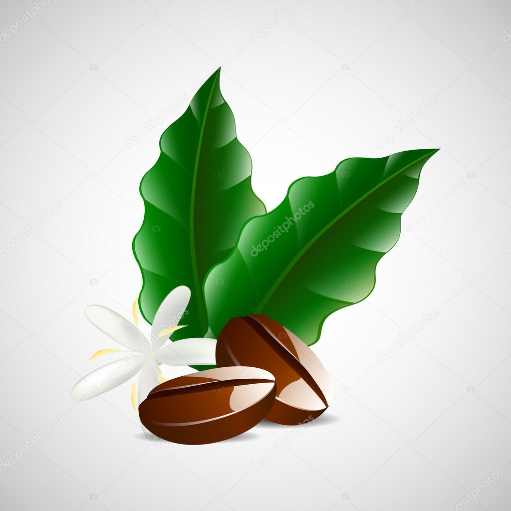 single coffee bean with leaf isolated on white background