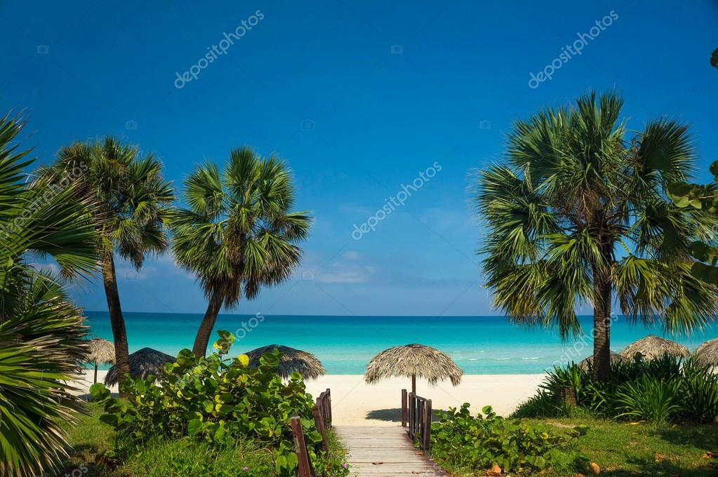 Beach With White Sand Palm Trees And Umbrellas Stock Photo