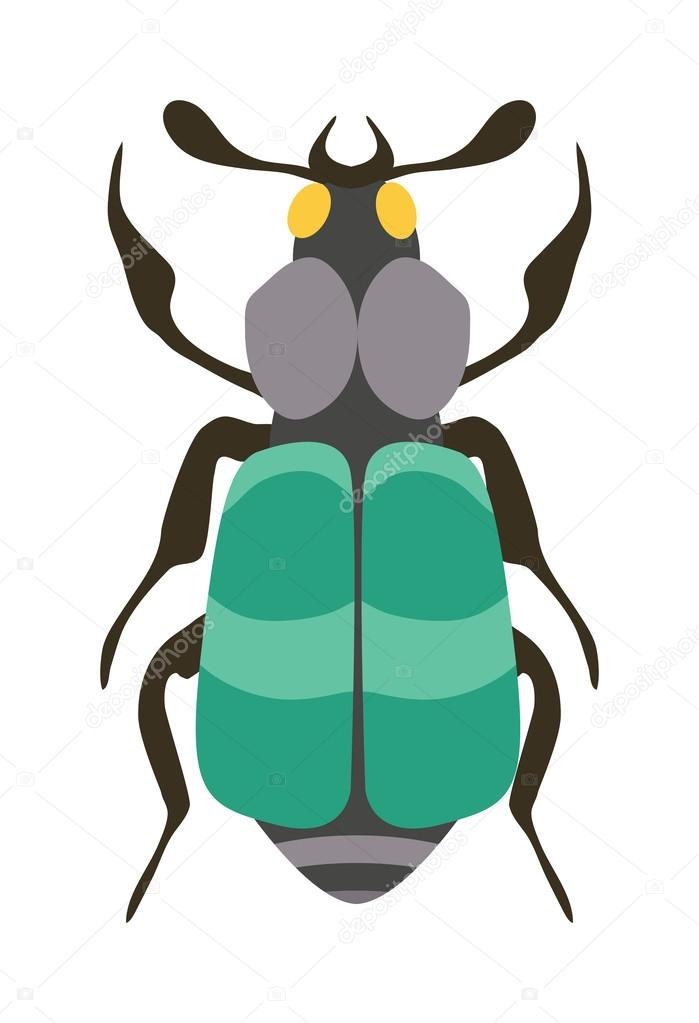 Beetle flat insect bug in cartoon style vector