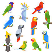 Cartoon parrots set and parrots wild animal birds vector illustration