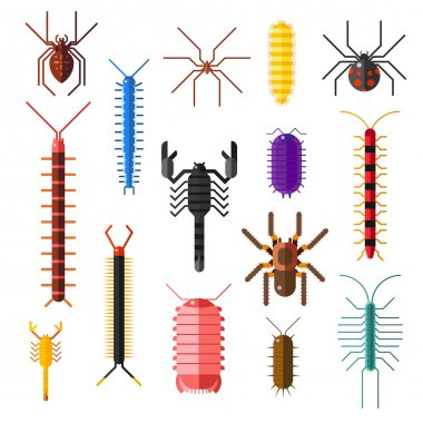 Spiders and scorpions dangerous insects animals vector cartoon flat illustration