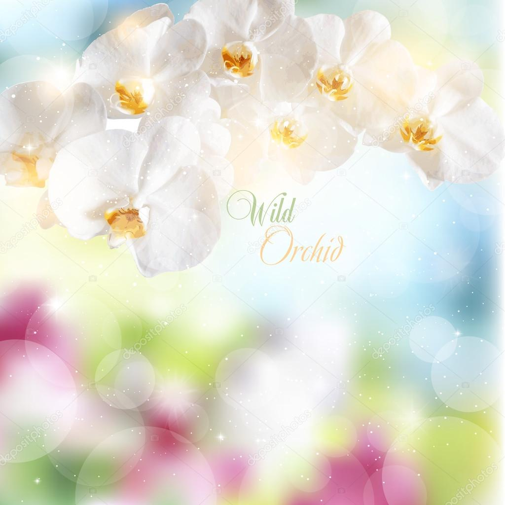Abstract summer background with flowers of white orchids.