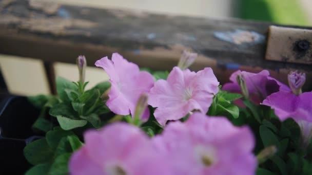 Detailní záběr fialových květů, které se hladce pohybují ve větru. Kamera natáčí v pohybu