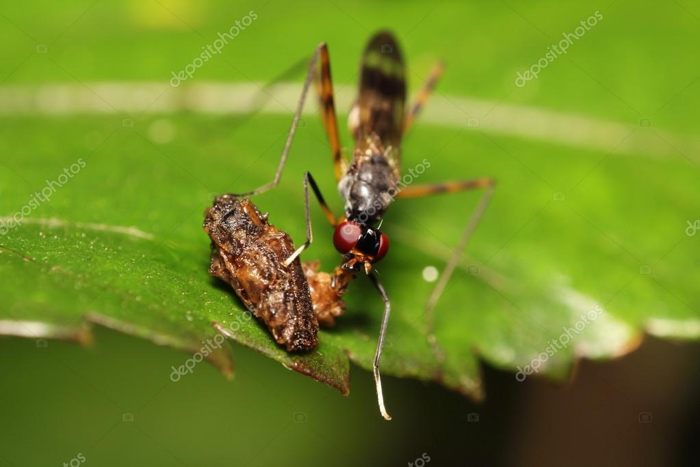 Insecto y peque os insectos fotos de stock sarawuth123 for Insectos del jardin