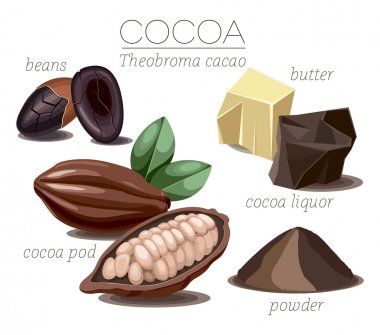 Superfood cocoa beans
