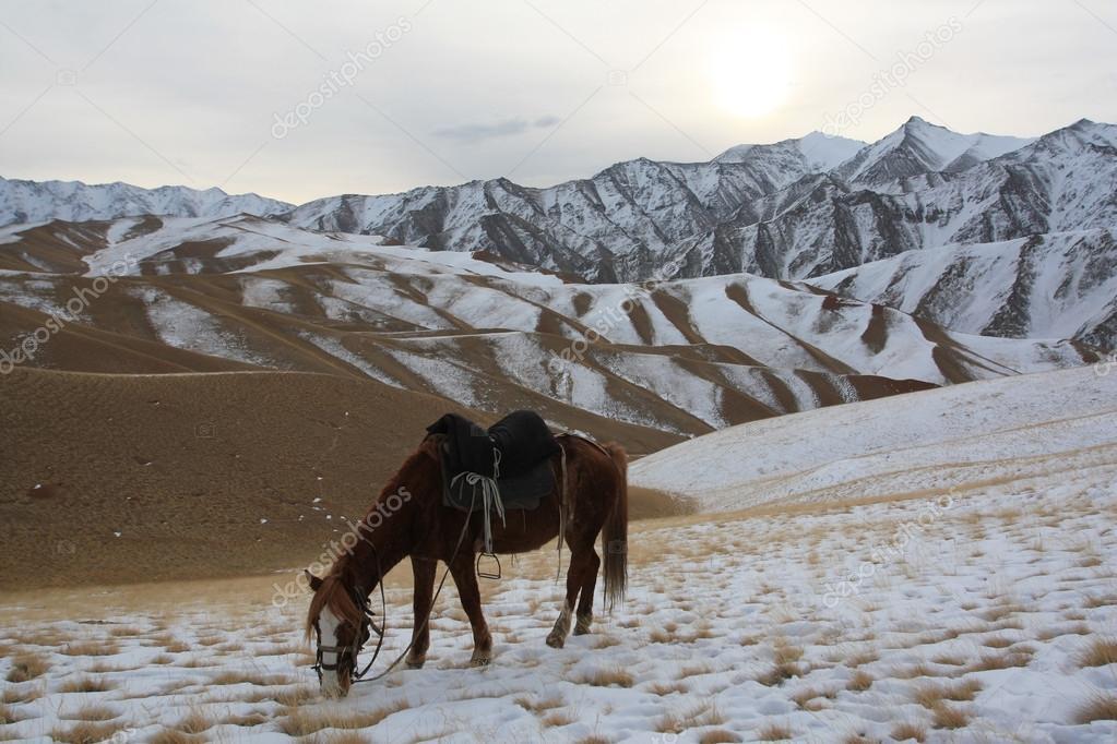 Kışın Otlatma Tien Shan Dağlarında Kırgız Ati Stok Foto Okyela
