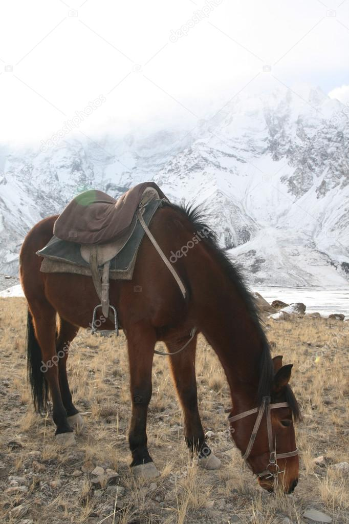 Kırgız Atı Dağda Otlayan Saddle Bay Stok Foto Okyela 56933357