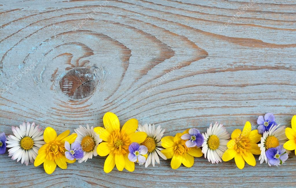 Border row of spring fieldflowers such as buttercups and daisies on a blue grey ols used knotted wood with empty space layout for basic moodboard