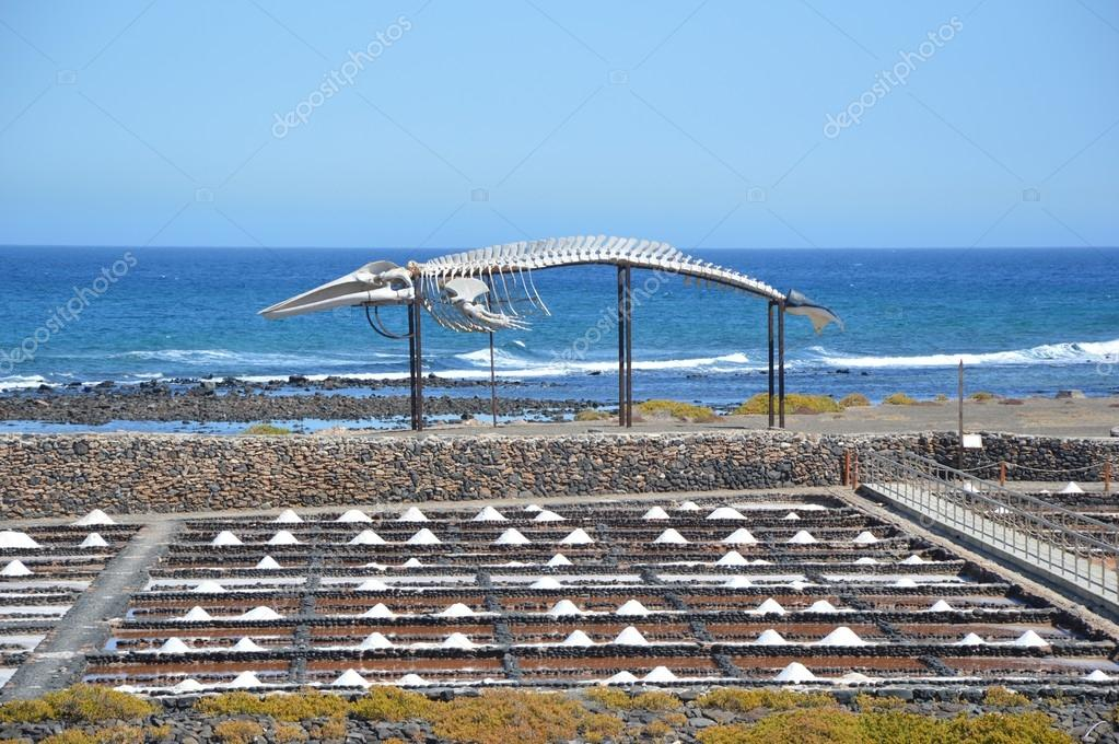 Saline with whale skeleton in the background