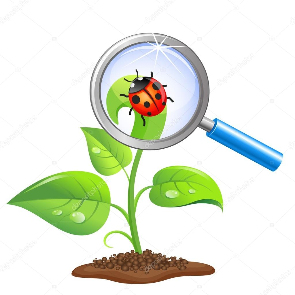 Young green sprout with ladybug and magnifier