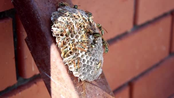 A small wasp nest with wasps on a metal beam close-up. A selective shot.