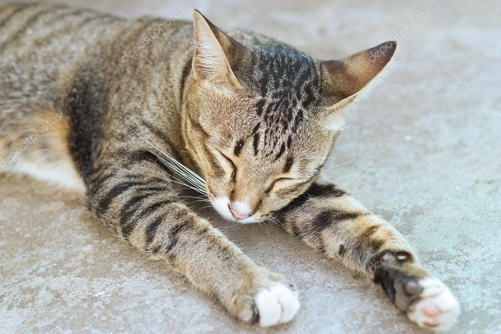 Slapen Op Grond : Kat slapen op grond van cement u2014 stockfoto © ipopba #106607624