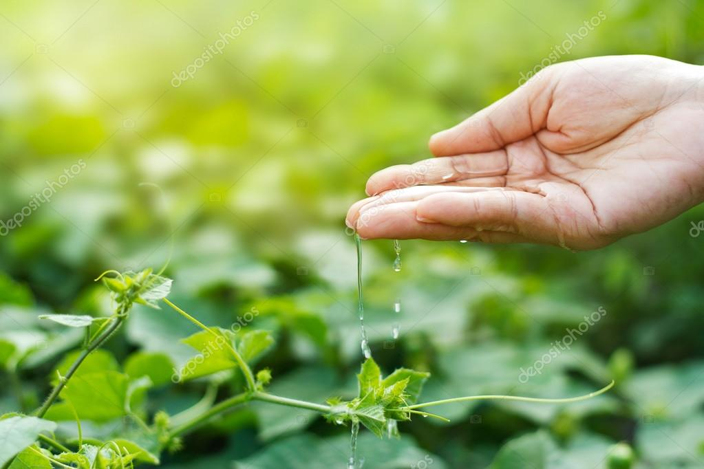 woman hand watering young plants in sunshine on green background
