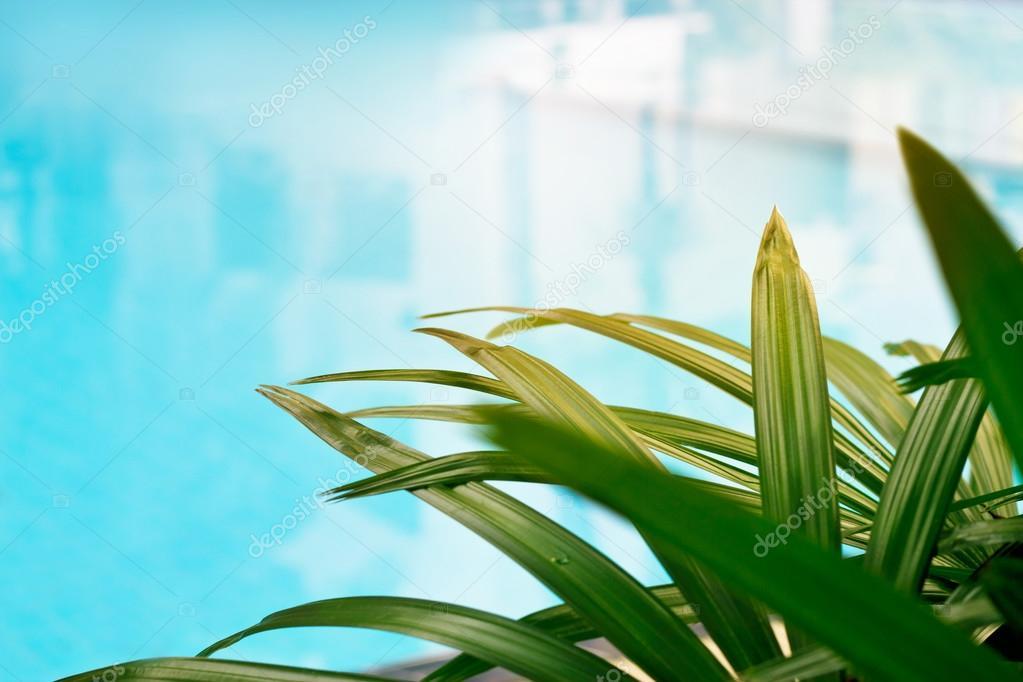 Schwimmbad Im Plam Bäume Garten, Soft Fokus Und Unschärfe Konzept U2014 Foto  Von Ipopba