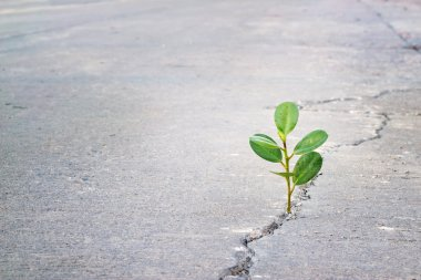 young plant growing in crack street, hope and impressive emotion