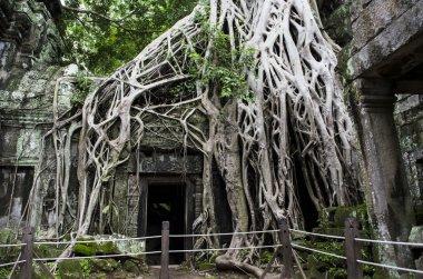 The Ta Phrom temple in Siem Reap
