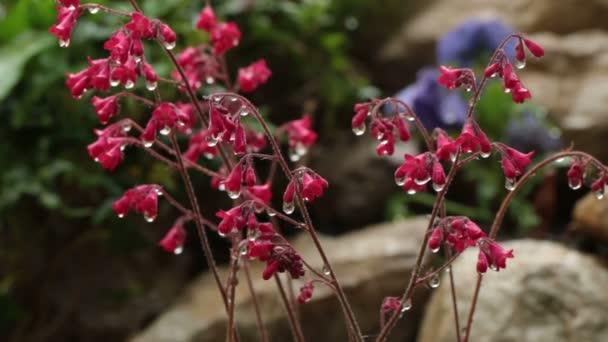 Kapky vody dopadající na květ
