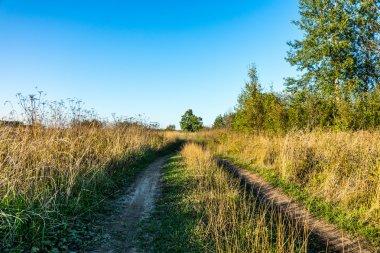 Dirt road in a field.