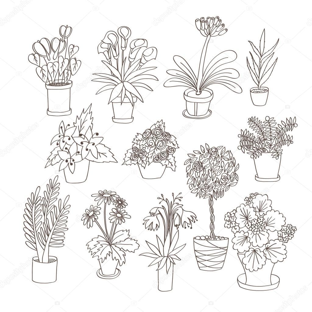 Set of indoor plants