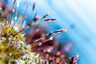 Abstract, colorful composition with moss flowers
