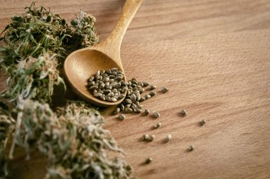 cannabis seeds and money