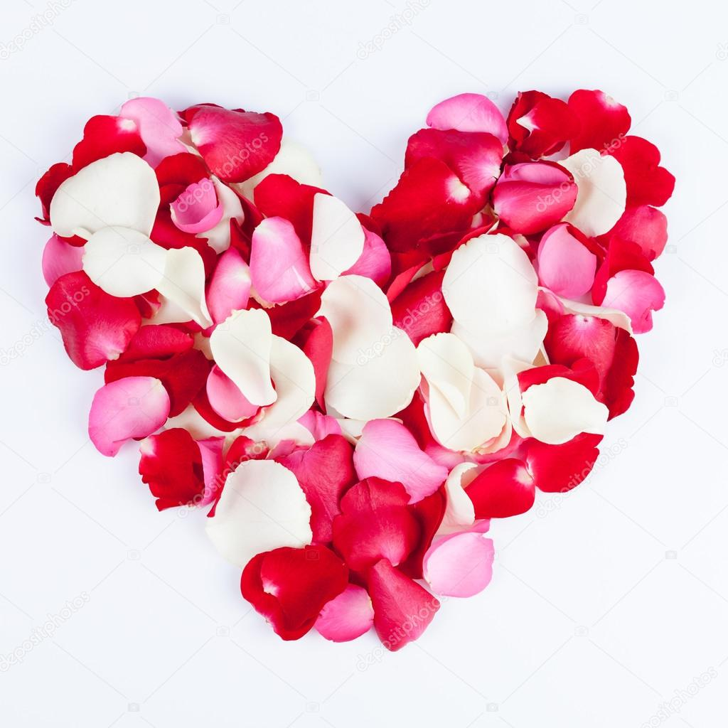 Heart made out of rose petals on white