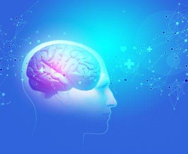 The Human Body - Brain