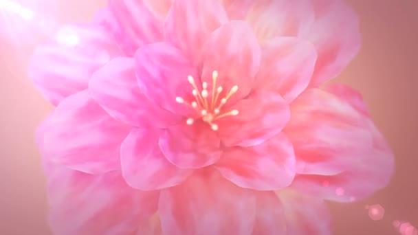 Virágzó rózsaszín virág felülnézetben