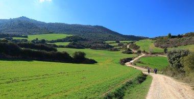 Pilgrims walking through endless green fields under the sun of a beautiful spring morning, Camino de Santiago, Navarra, Spain