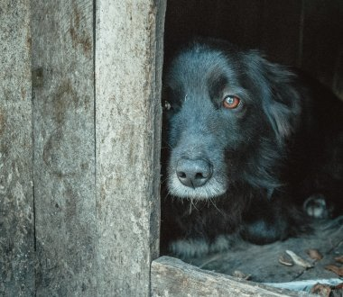 Shelter for animals. Miserable dog waiting for its master