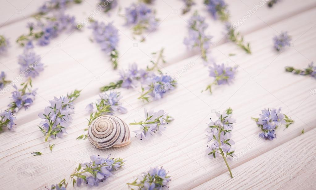 Wedding decorations in provence style stock photo konoplizkaya beautiful delicate festive wedding background in provencal style delicate field of blue cornflowers and natural white wood background photo by junglespirit Image collections
