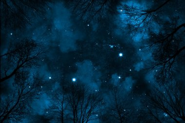 spooky low angle view on starry night sky with blue nebula, view trough trees in forest