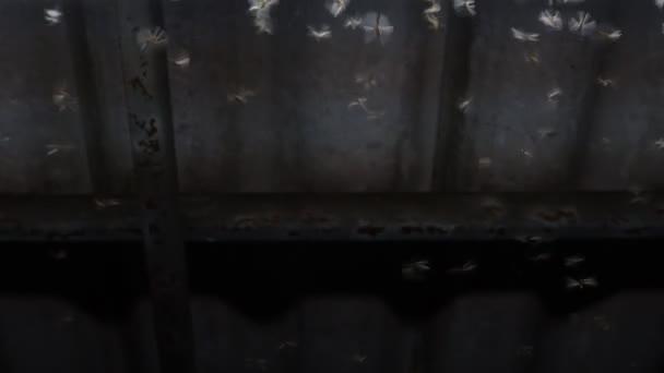 Alate fliegen in der Nacht