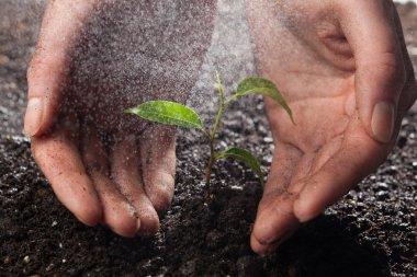 Hands holding a green plan