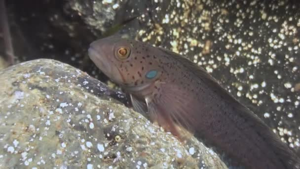 A small fish among the rocks on the seabed.