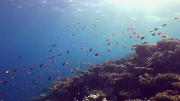Paesaggio subacqueo del mare della barriera corallina tropicale.