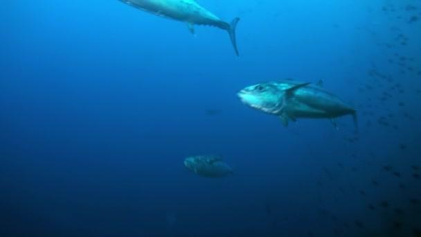 Schwarm tropischer Fische am Riff auf Nahrungssuche.