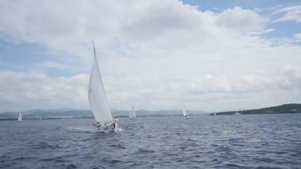 Plachetnice, jachty s bílými plachtami v otevřeném moři.