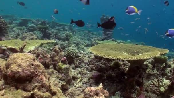 Paesaggio sottomarino della barriera corallina. Maldive.