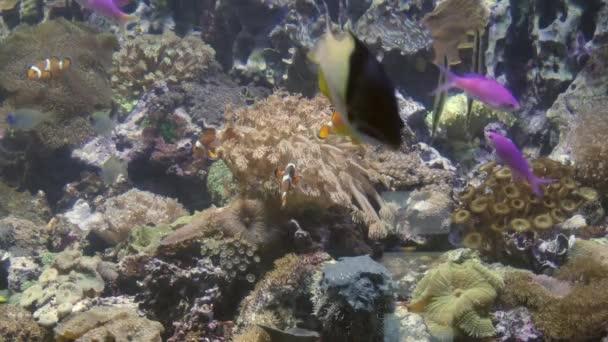 Fischschwärme im Ozeanarium, Tiefsee-Weltpanorama