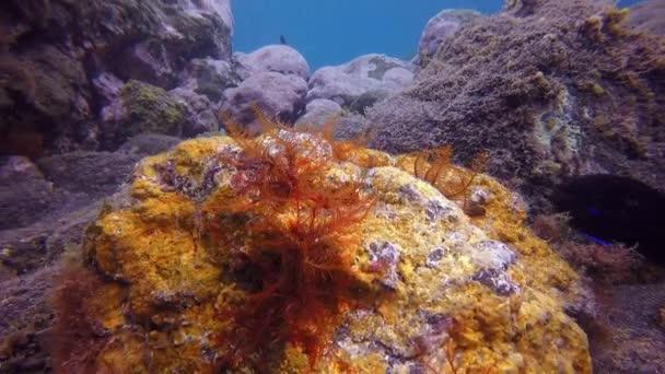 Bright fish underwater in Atlantic ocean.