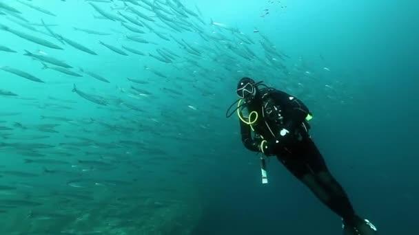 Diver near school of fish one species underwater.