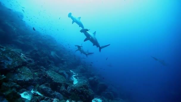 Kalapácsfejű cápák csoportja úszik a víz alatt, közel az óceán fenekéhez..