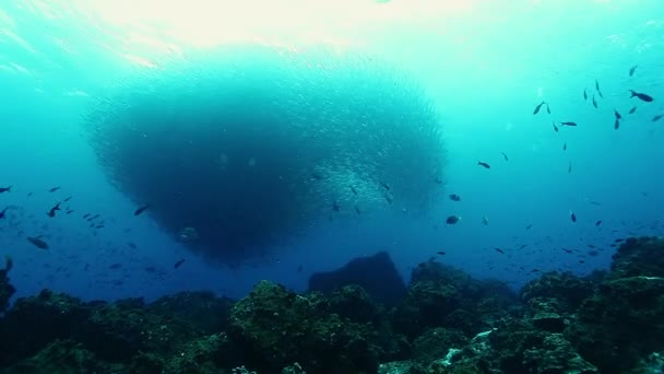 Circular motion of large concentrations of fish underwater.